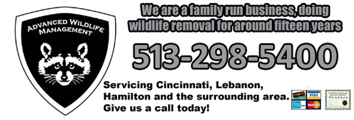 Cincinnati Wildlife Control Pest Animal Removal And Trapping